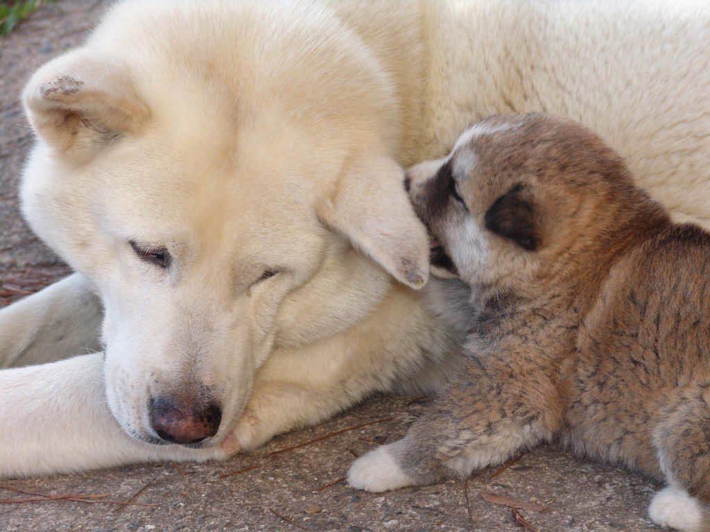 perros con celos