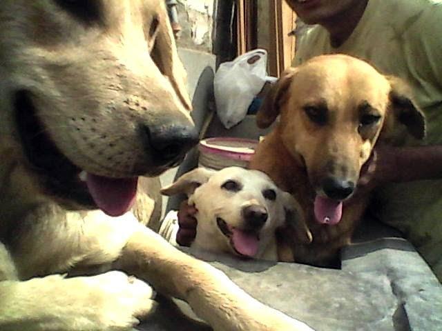 consejos para perros labradores