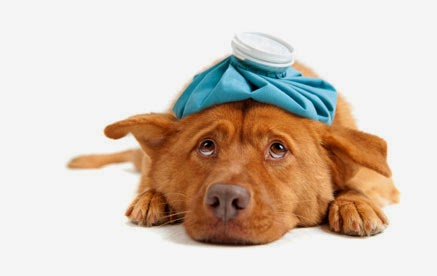 seguro de perros