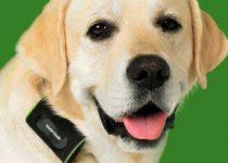comprar gps para perros